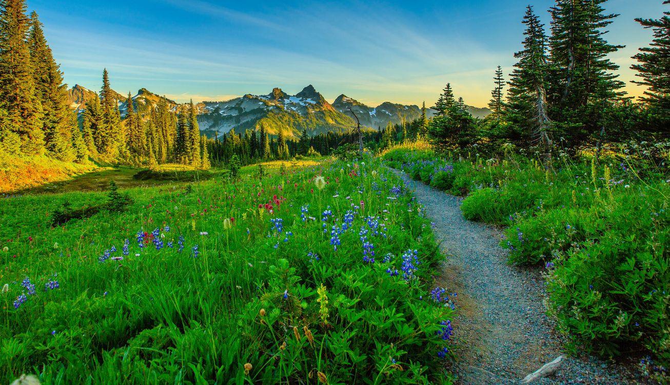 Обои Mount Rainier National Park, Washington, Альпийский луг, закат, поле, тропинка, деревья картинки на телефон