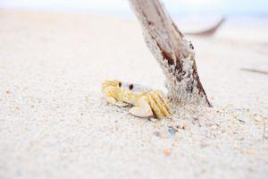 Фото бесплатно рука, пляж, коряга