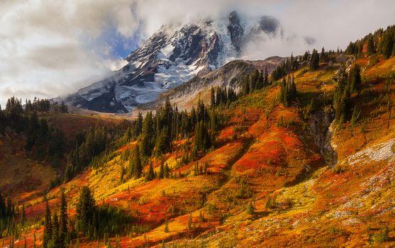 Photo free Mount Rainier, mountains, trees