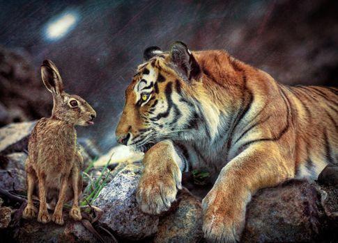 Фото бесплатно тигр, заяц, кролик