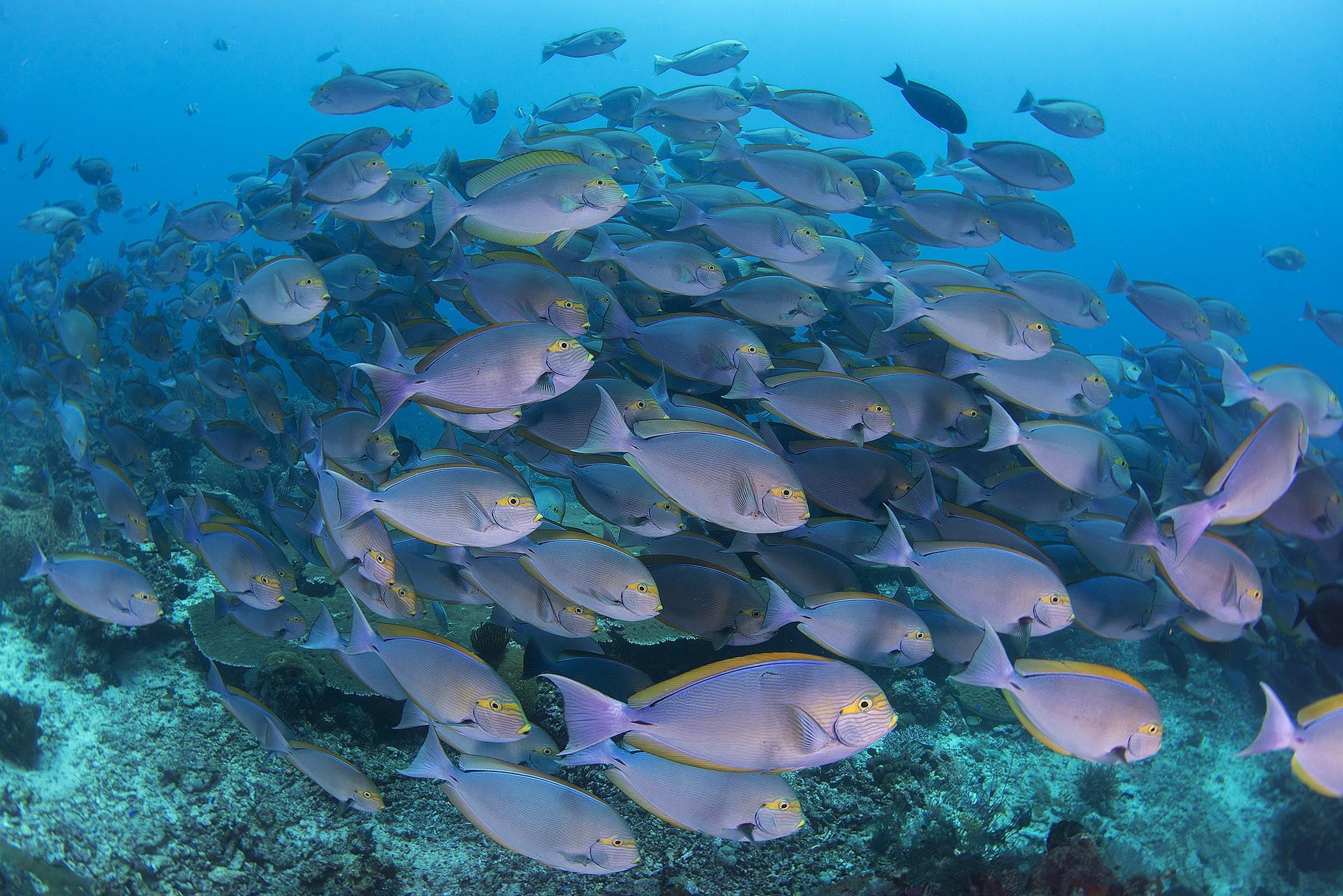 Обои Морские обитатели, морское дно, рыбы, море