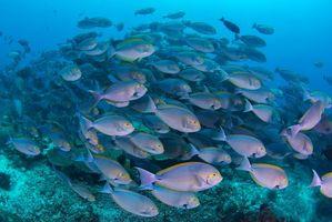 Заставки Подводный мир, морские обитатели, рыба