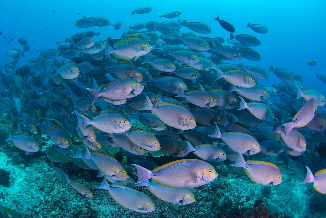 Фото бесплатно Подводный мир, морские обитатели, рыба - на рабочий стол