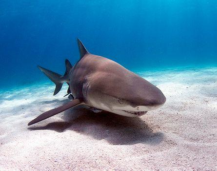 Скачать акула, акулы фото с сайта fonwall