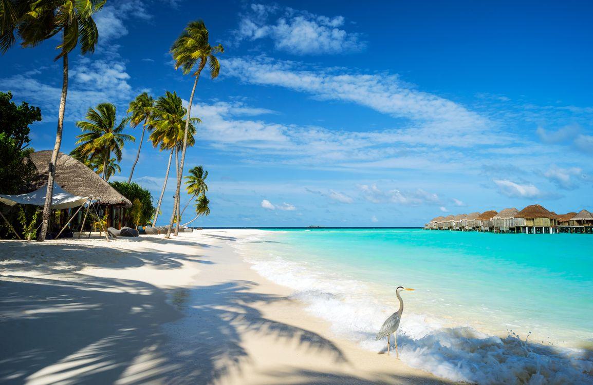 Фото бесплатно тропики, Мальдивы, море, пляж, курорт, бунгало, птичка, пейзажи