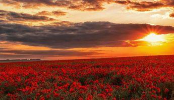 Бесплатные фото закат,поле,маки,цветы,пейзаж