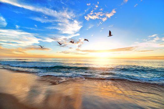 Заставки море, птички, рыбки