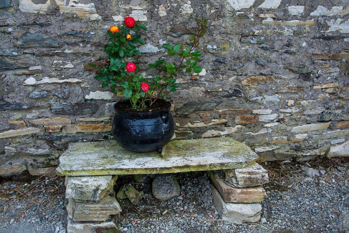 Фото бесплатно Интерьер, стена, лавочка, горшок, цветы, розы, интерьер