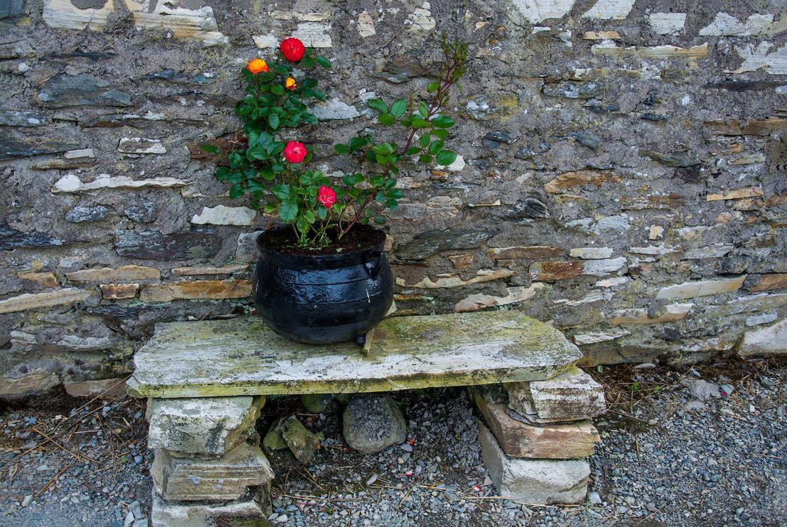 Фото бесплатно Интерьер, стена, лавочка, горшок, цветы, розы, интерьер - скачать на рабочий стол