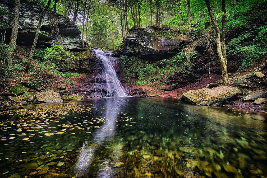 Фото бесплатно Ricketts Glen State Park, Pennsylvania, Риккетс Глен Стейт Парк, водопад, скалы, деревья, природа, природа