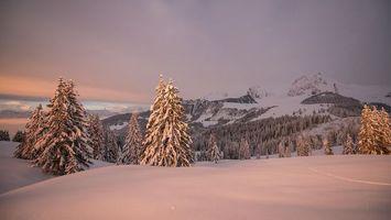 Фото бесплатно деревья, пейзаж, Швейцария