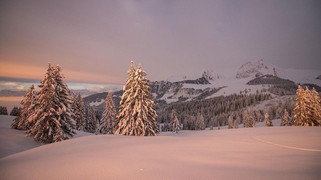 Фото бесплатно зима, закат, горы, деревья, пейзаж, Швейцария, пейзажи