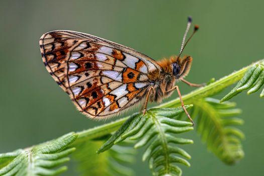 Фото бесплатно насекомые, бабочки, макросъемка