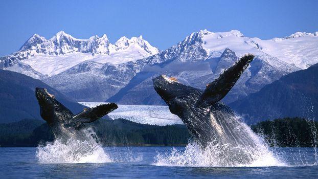 Photo free whale, mammal, pozvonochnye