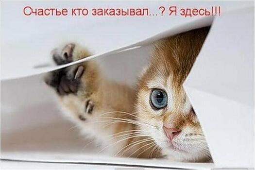 Postcard free tex, kitten, postcard