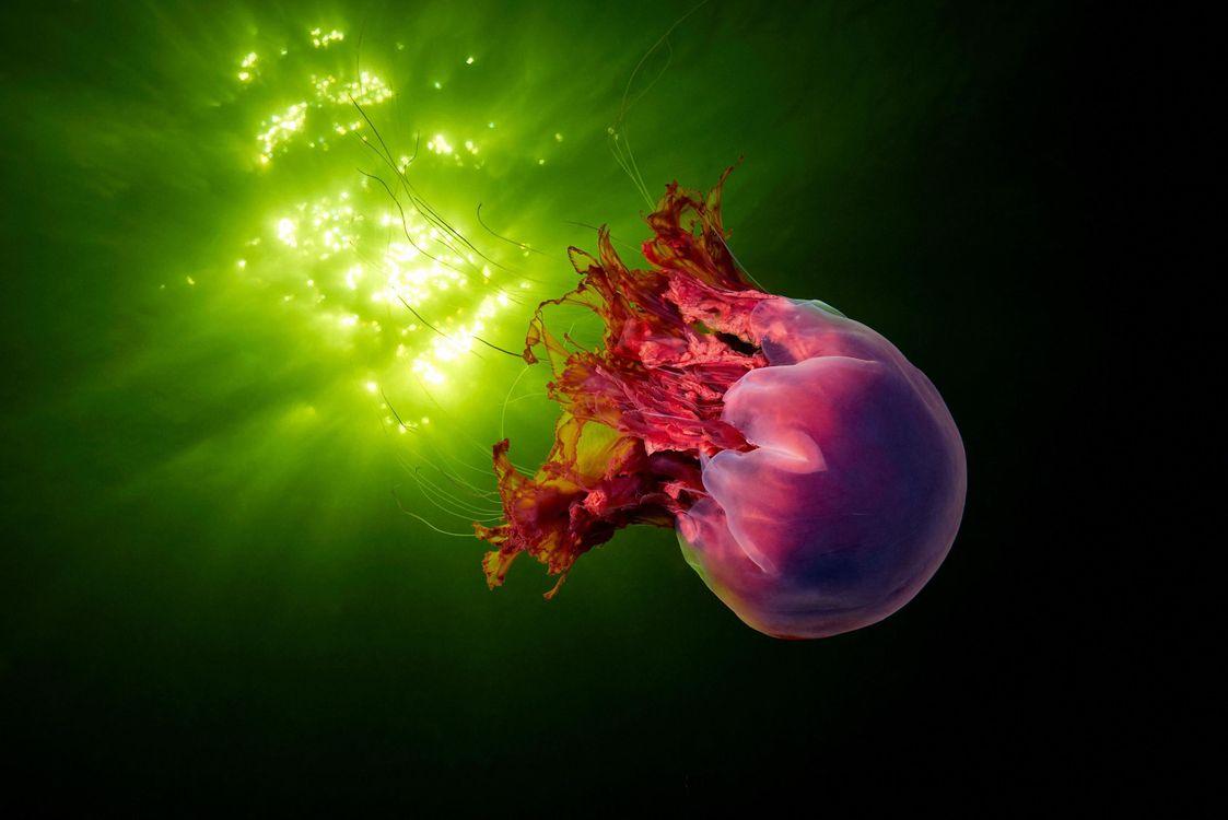 Фото бесплатно медуза, подводный мир, море, океан, подводный мир