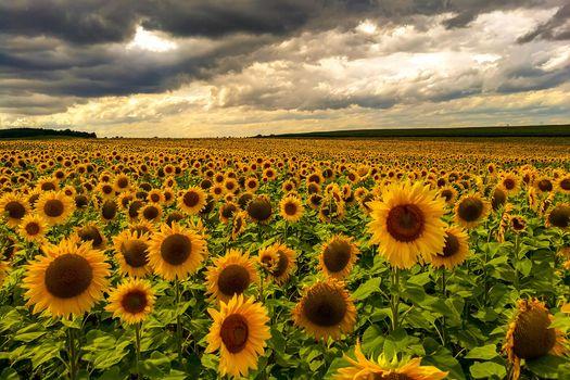 Фото бесплатно большое поле, цветы, закат
