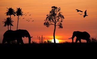 Заставки закат, силуэты, слон