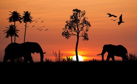 Фото бесплатно закат, силуэты, слон