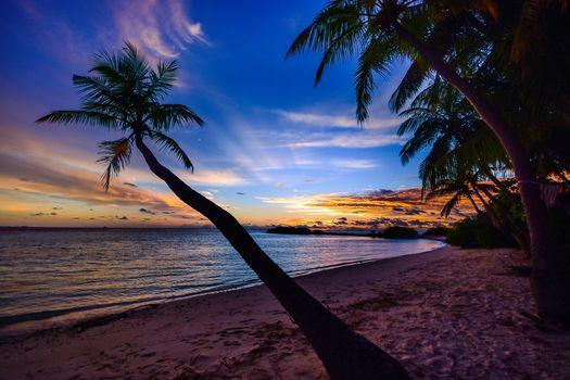 Заставки кокос, деревья, пляж