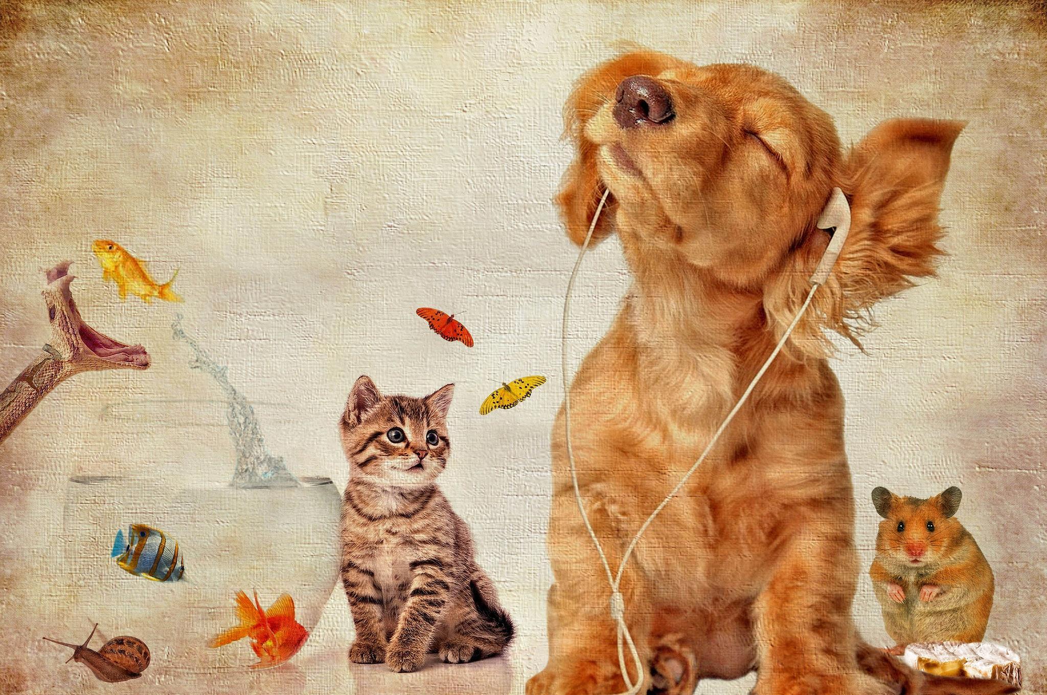 Обои собака, котёнок, хомяк, акквариум
