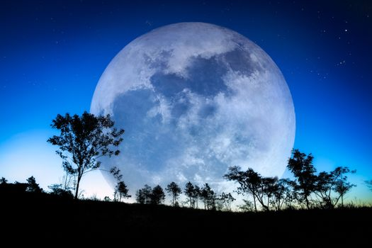 Photo free huge moon, stars, trees
