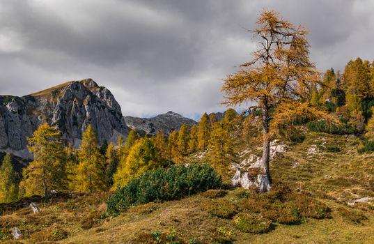 Фото бесплатно природа, Словения, осень