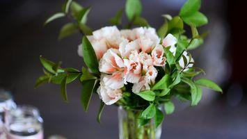 Заставки цветы, ваза, ветки, букет, листья