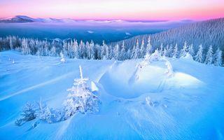 Photo free trees, snow, Computer graphics