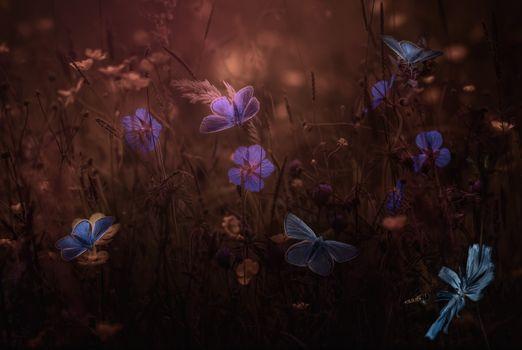 Photo free field, dusk, flowers