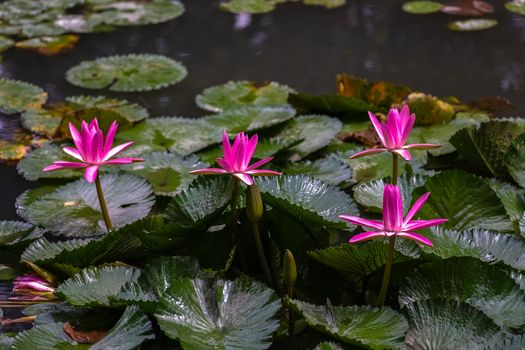 Photo free water lily, beautiful flowers, beautiful flower