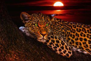 Фото бесплатно лунном свете, зверь, арт