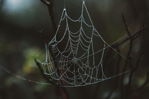 паутина, капли, крупный план, spider web, drops