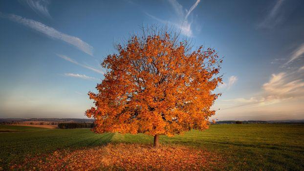 Photo free autumn tree, field, nature