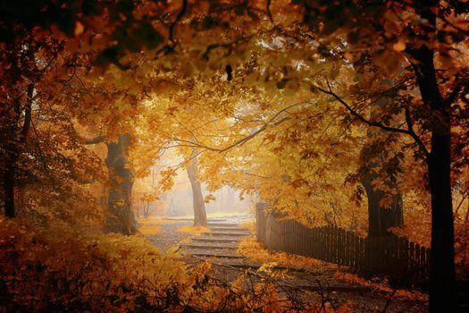 Фото бесплатно путь, листья, ограда
