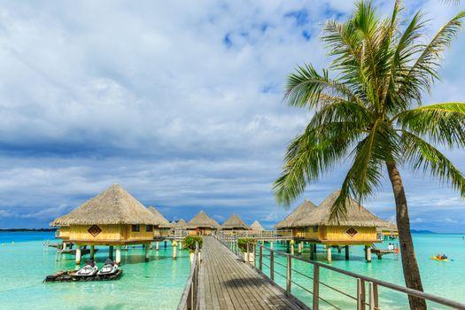 Фото бесплатно Французская Полинезия, отдых, пальмы