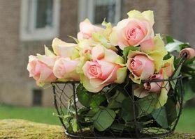 Бесплатные фото корзинка,розы,нежность,букет