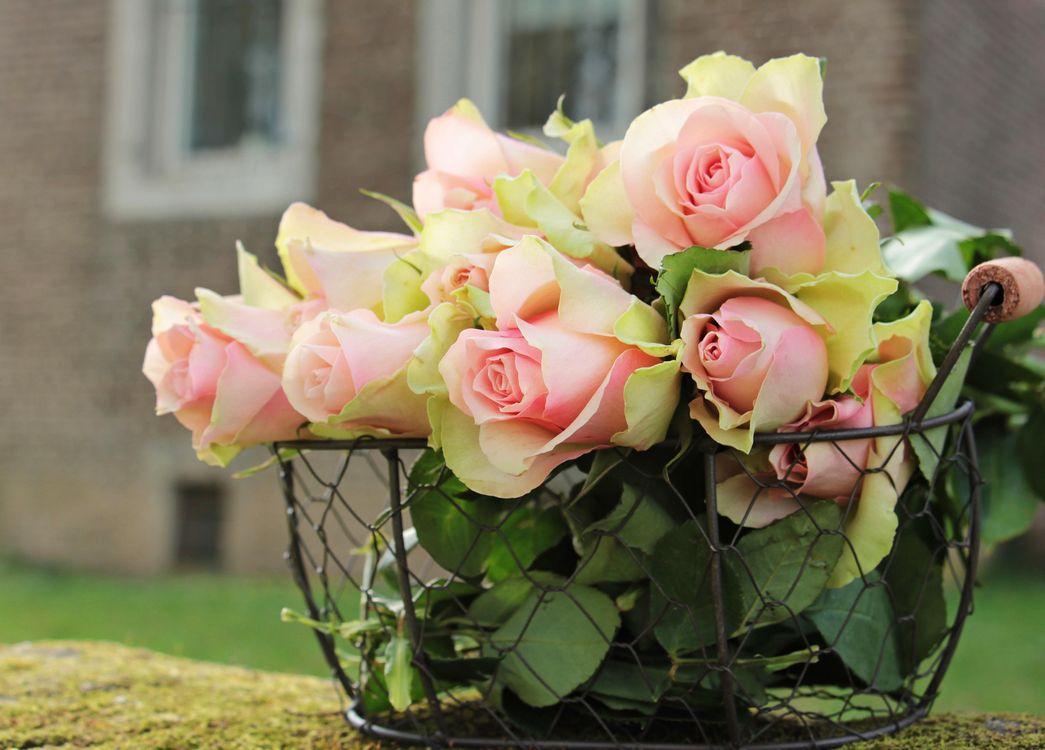 Фото бесплатно корзинка, розы, нежность - на рабочий стол