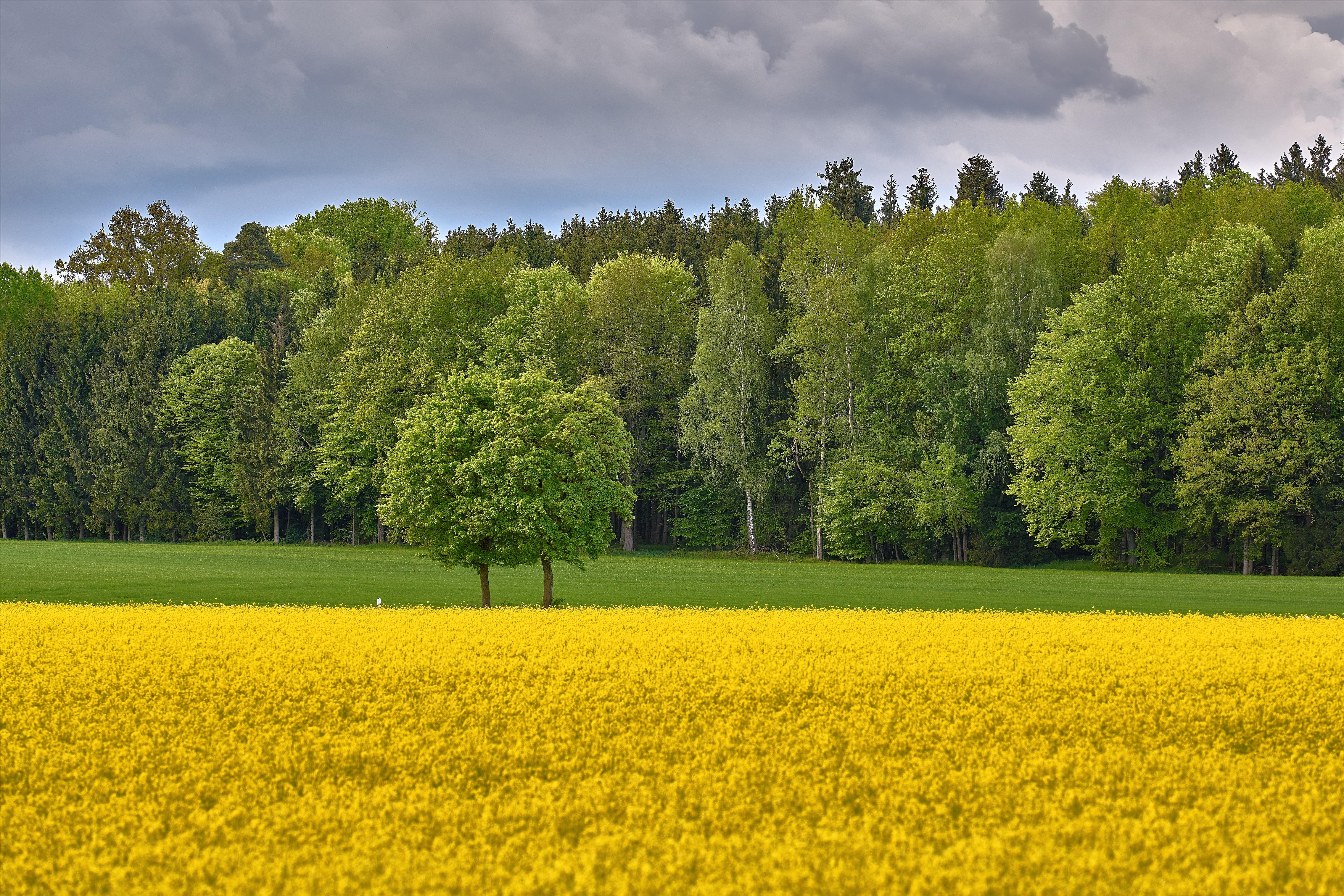 Обои поле, цветы, деревья, пейзаж