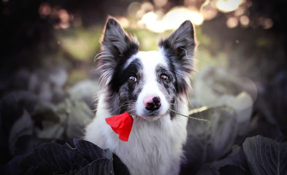 Photo free puppy, dog, red flower