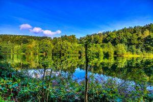 Бесплатные фото река, лес, деревья, пейзаж