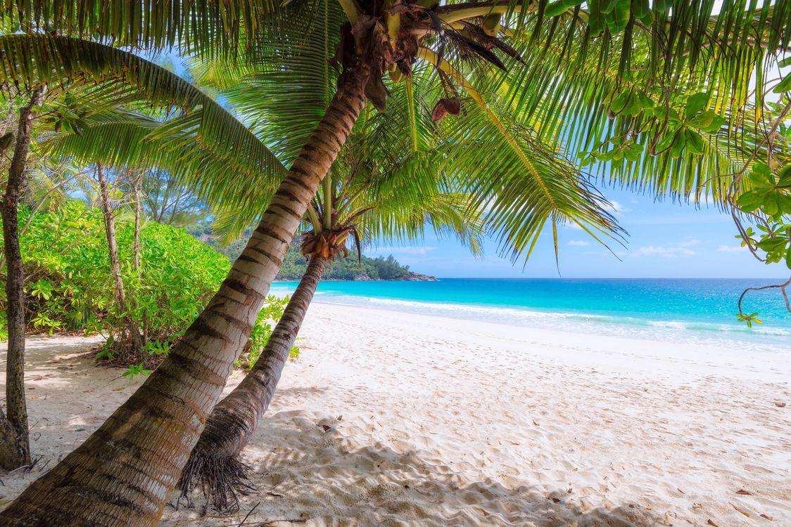 Обои тропики, море, пляж на телефон | картинки пейзажи