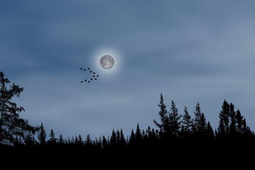 Фото бесплатно Луна, лес, стая птиц