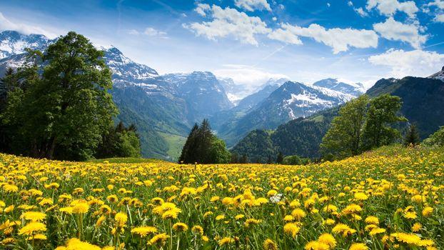Фото бесплатно горный пейзаж, пейзажные луга, тараксакум