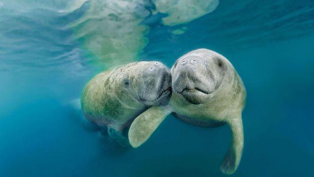 Фото бесплатно подводный, океан, млекопитающее