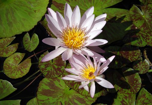 Photo free body of water, water-lilies, water lilies