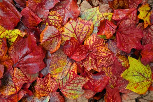Photo free autumn, autumn leaves, autumn background