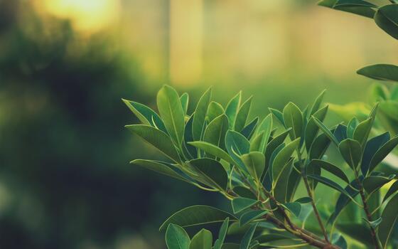 Фото бесплатно закат, листья, природа