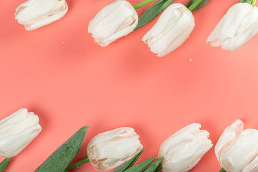 Photo free flower, white, tulips