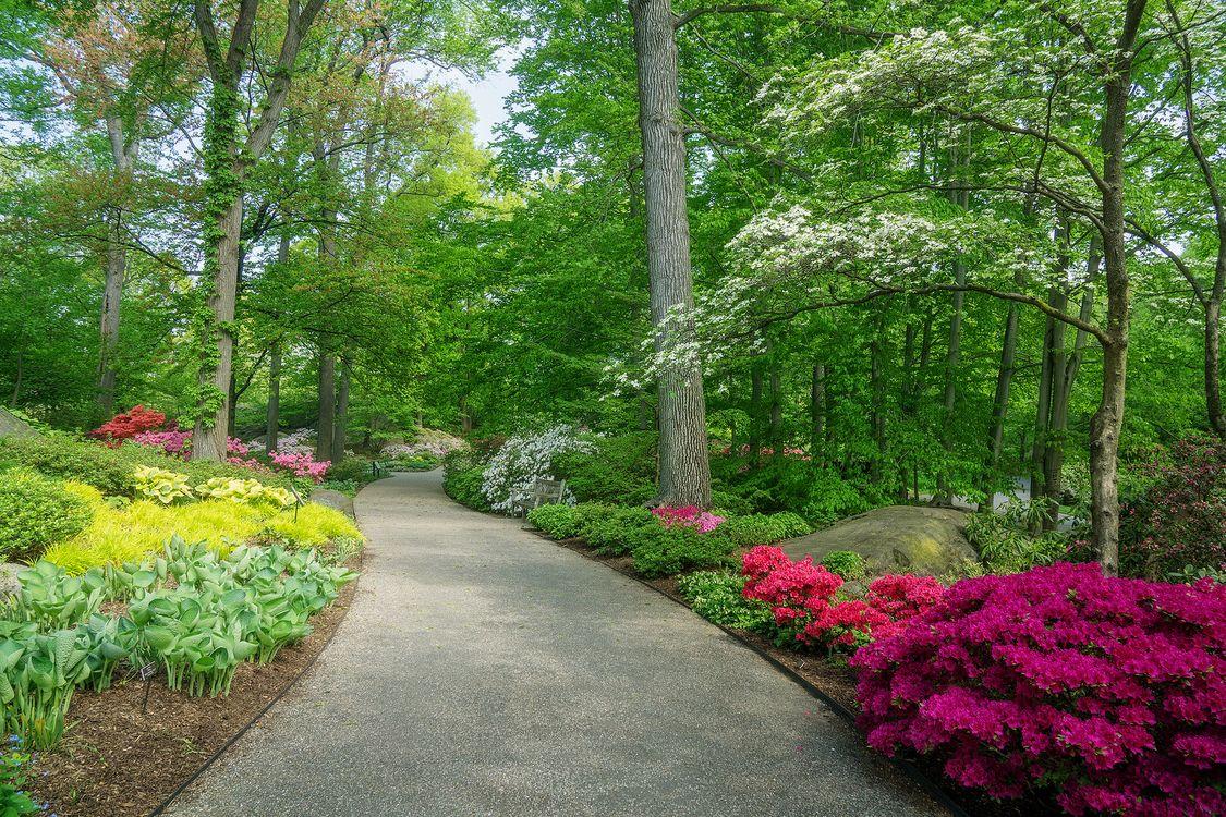 Free photo scenic, landscape, flowers - to desktop
